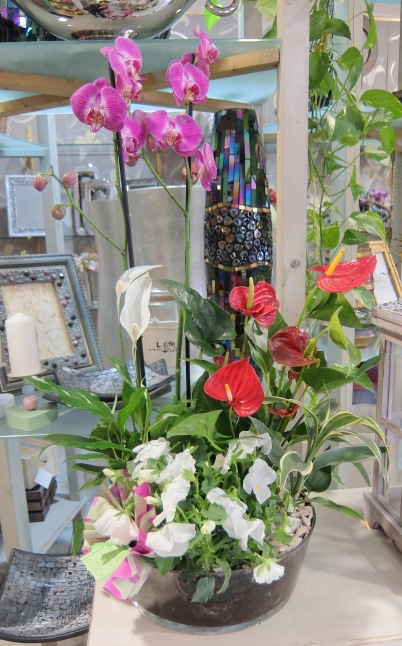 Centro de plantas con orquideas